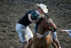 Wild poneyras Stock Foto