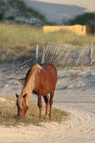 Wild ponny fotografering för bildbyråer