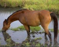 wild ponny Royaltyfri Bild