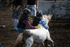 Wild pony race Stock Image
