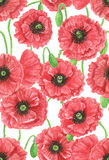Wild poppies watercolor pattern Royalty Free Stock Images