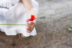 Wild poppy in childs hand Stock Photography