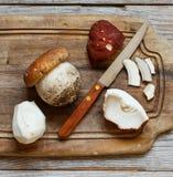 Wild porcino mushrooms Stock Photo