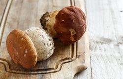 Wild porcino mushrooms Royalty Free Stock Image