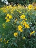 Wild prairie grasses. Natural prairie wild grasses and flowers habitat Royalty Free Stock Photos