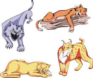 Wild Predator Cats Set. Set of wild predator cats. Vector illustrations Stock Photos