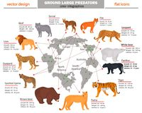 Wild predators, their habitat, growth, weight and longevity color infographics Royalty Free Stock Photography