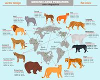 Wild predators, their habitat, growth, weight and longevity color infographics Stock Photography