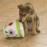 Wild Puppy Stock Image
