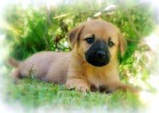Wild Puppy Stock Photo