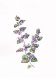 Wild purple flowers. The hand painted watercolor of wild purple flowers Royalty Free Stock Photography