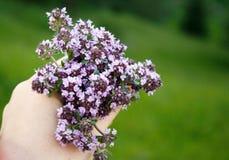 Wild purple flowers over green field Stock Photo