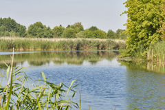 Wild quiet reed river landscape Royalty Free Stock Images