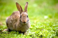 Wild rabbit. In the nature Stock Image