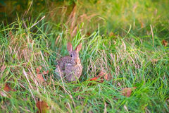 A wild rabbit in the forest Stock Images