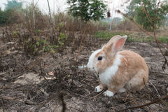 Wild rabbit on the grass nature. Background Stock Photo