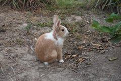 Wild rabbit on the grass nature Royalty Free Stock Photos