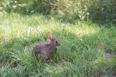 Wild rabbit in green grass Stock Image