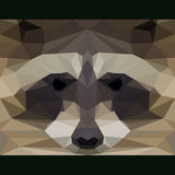 Wild raccoon stares forward. Abstract geometric polygonal triangle illustration. Wild raccoon stares forward. Nature and animals life theme background. Abstract Royalty Free Stock Photo