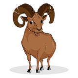 Wild Ram. Illustration is Wild Ram Standing Royalty Free Stock Photo