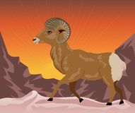 Wild Ram in the Mountains Royalty Free Stock Photography