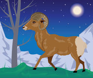 Wild Ram in the Mountains Stock Image
