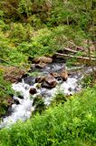 Wild, rapid mountain stream in the middle of the forest royalty free stock image