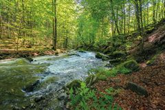 Wild rapid river in the ancient beech forest. Stones covered in moss on the shore of a powerful water flow. beautiful nature background. refreshing summer stock images