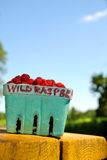 Wild Raspberries Stock Image