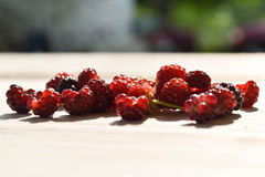 Wild Raspberries Stock Photo