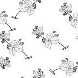Wild raspberries seamless  background, black and white periodic pattern. Stock Photography