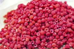 Wild raspberry heap. Harvested wild respberry heap from alpine forest Royalty Free Stock Photography