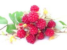 Wild raspberry Stock Photos