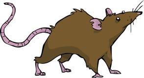 Wild rat. On white background vector Stock Photos