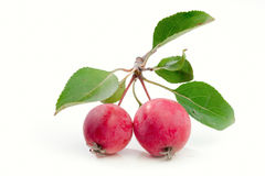 Wild red apples Royalty Free Stock Photos
