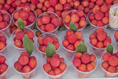 Wild red berry Royalty Free Stock Photos