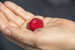 Wild red berry Stock Photo