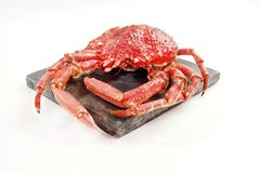 Wild Red Crab Royalty Free Stock Photo