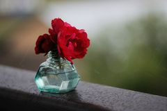 Wild red roses in glass vase with rain drops. Wild red roses in turquoise glass vase with rain drops Royalty Free Stock Photo