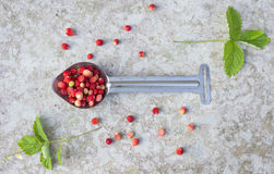 Wild red strawberry with green leaf Stock Photo