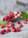 Wild red strawberry  in the spoon Royalty Free Stock Photo