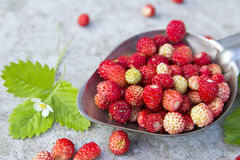 Wild red strawberry in the spoon Royalty Free Stock Photography