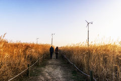 Wild reeds and wind turbines  in haneul park Stock Image