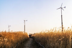 Wild reeds and wind turbines  in haneul park Royalty Free Stock Photos