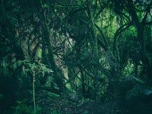 Wild regenwoud op de bergen van de Andes peru 3d zeer mooie driedimensionele illustratie, cijfer Royalty-vrije Stock Fotografie