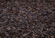 Wild Rice Royalty Free Stock Photos