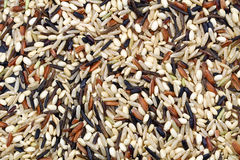 Wild rice background Royalty Free Stock Photography
