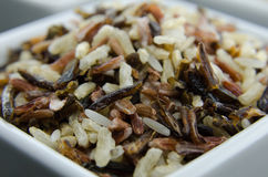 Wild Rice Close Up Royalty Free Stock Images