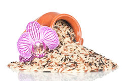 Wild rice with decorative orchid. Over a white reflective background Royalty Free Stock Image