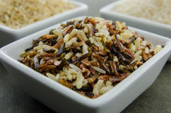 Wild Rice in Foreground Stock Image